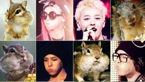 G-Dragon-hamsters