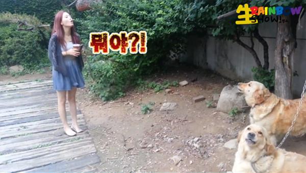 Jae Kyung-Dogs