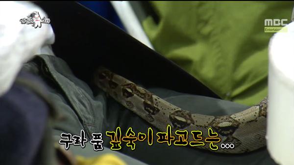 Mir's Snake