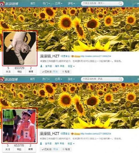 Tao-Profile