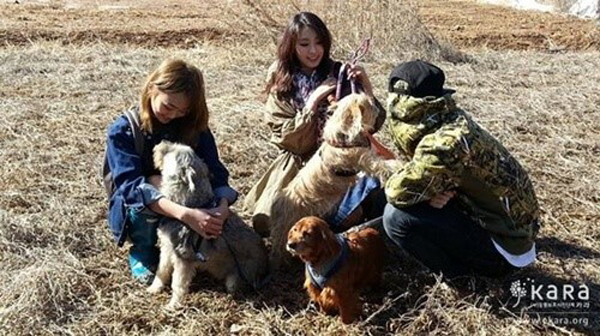 hyorin-bora-animal-shelter