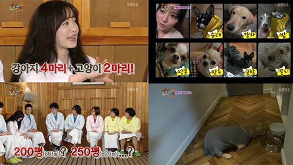 goo hye sun_10 pet_happy together 3