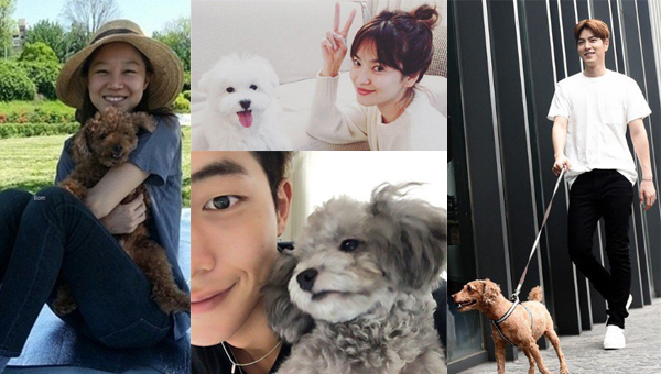 actor-actress-pet-korea
